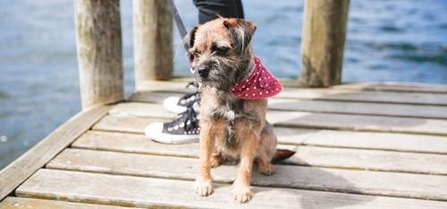 Dog on jetty